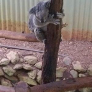 2015 オーストラリア・ケアンズ